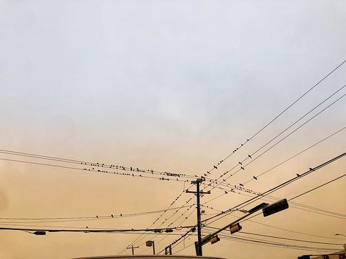 street photography photo iphone tx texas dallas sunset sunrise rise sun color wire birds bird