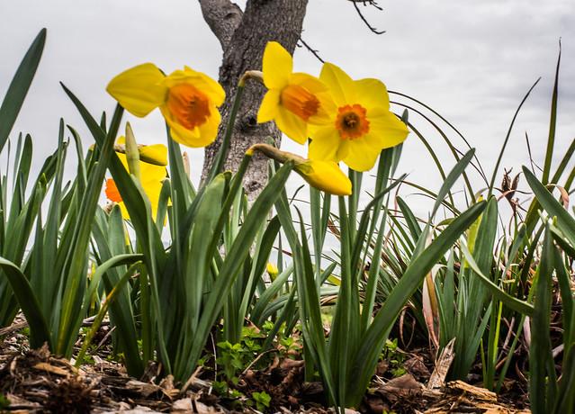 springtime in february