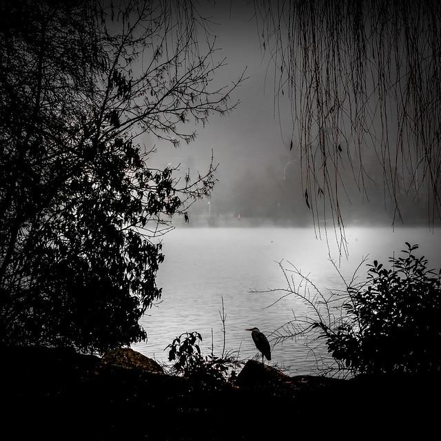 Le héron du lac Kir