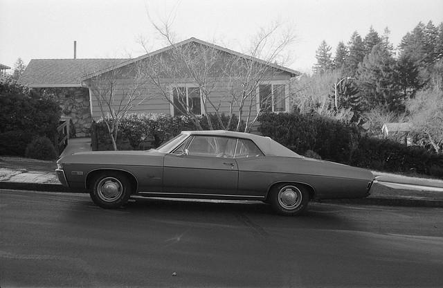 Wild Impala