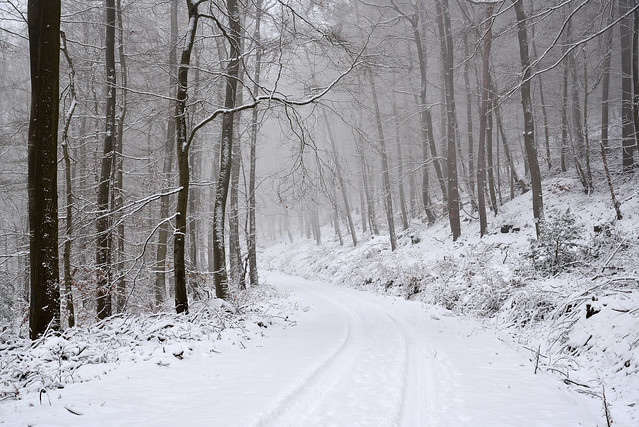Dans le froid de l'hiver