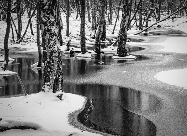 Epping forest when ice and snow followed heavy rain.