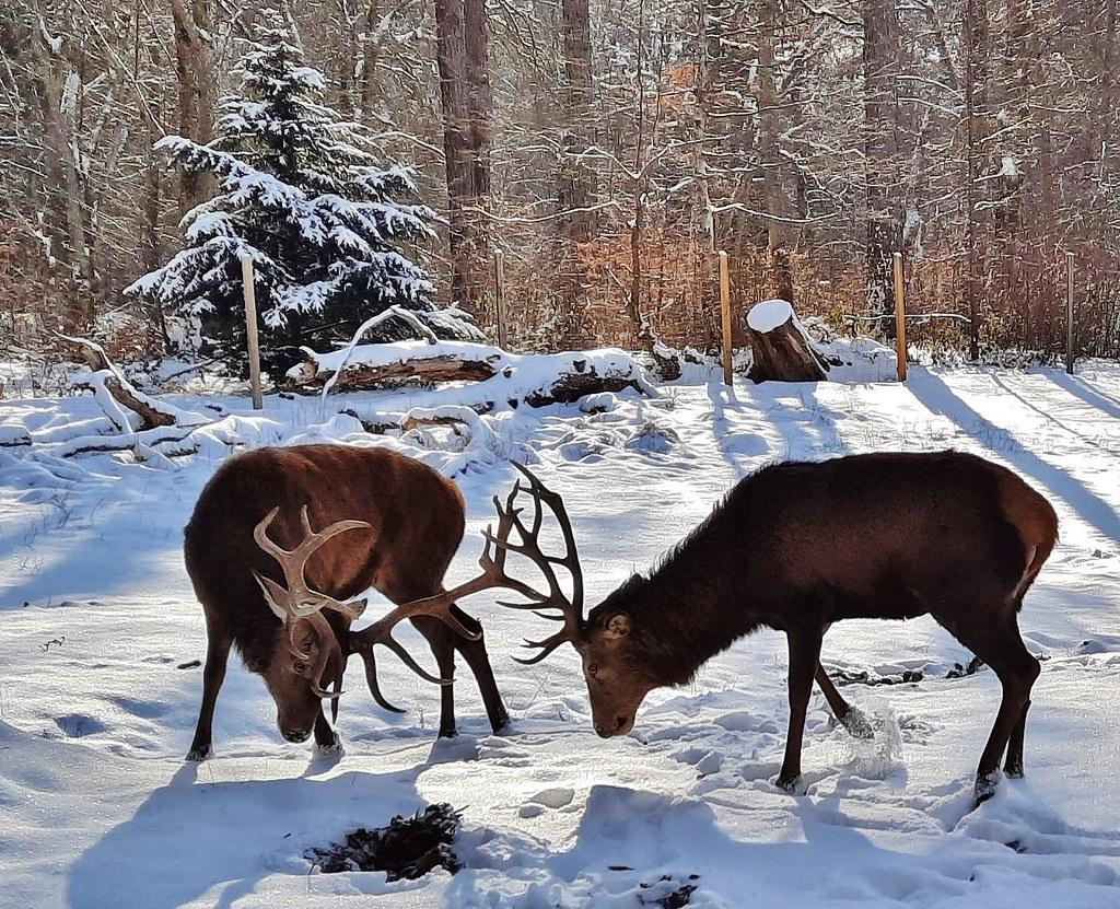 Germany, Winter im Rotwildgehege, serie , 60063/13386