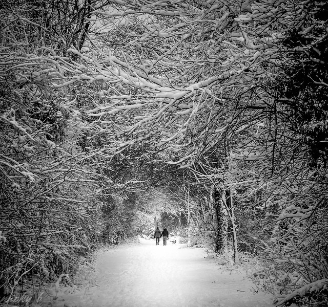Walking in Hamstreet Woods .Kent