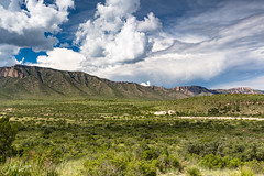 Pine Spring - Guadalupe Mountains National Park, Texas
