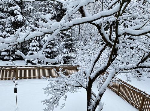 baltimore maryland home backyard snow winterwonderland trees fences iphone hff topf25