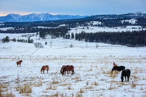 anarchistsummit bc britishcolumbia osoyoos horses winter