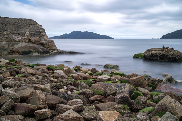 Green algae on seashore rocks