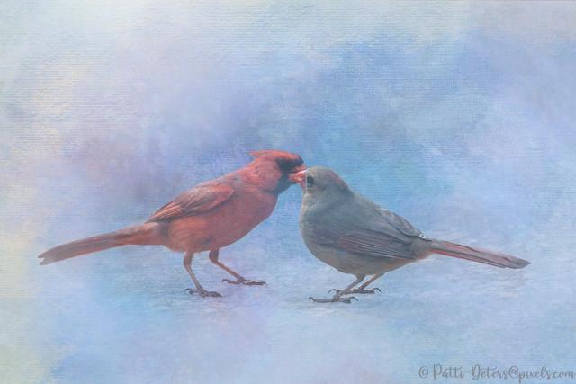 Cardinal Kisses