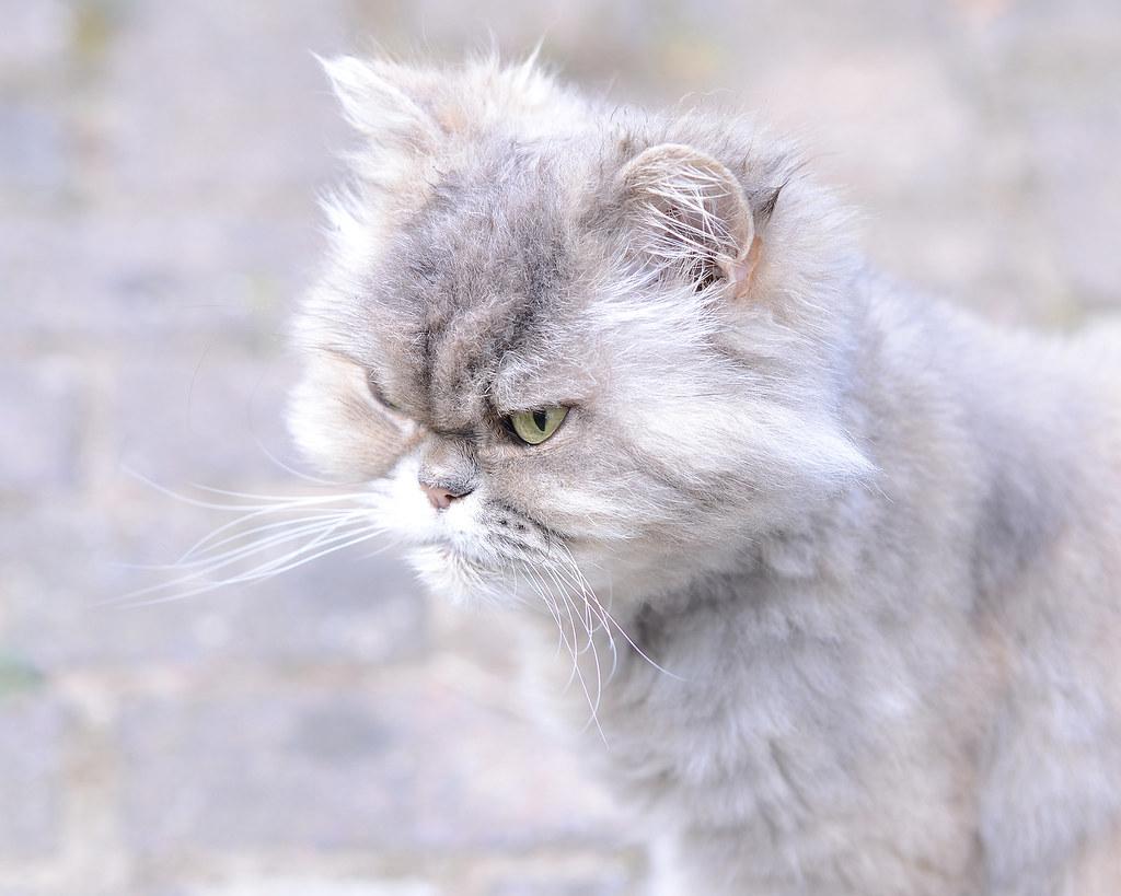 Darling Loulou. Sweet memories. A very special cat....