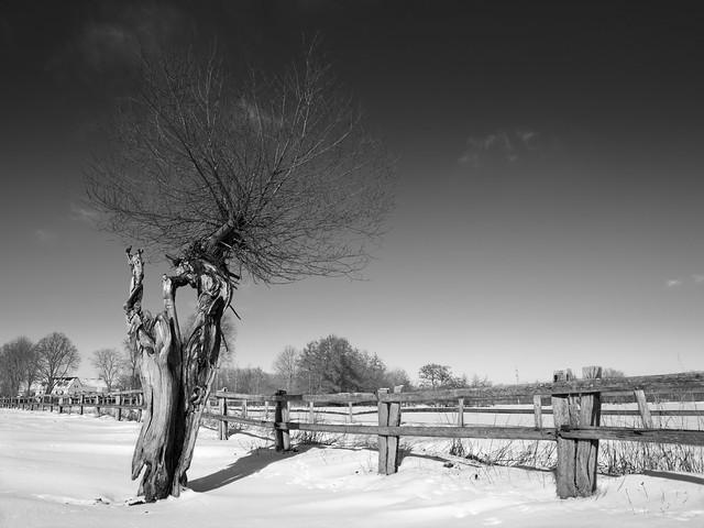Winter #6