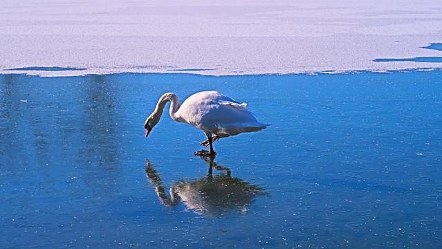 Spazierengehen auf dem Eis