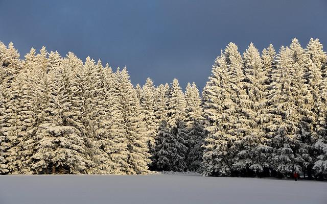 Hormerdorf: Geyerischer Wald