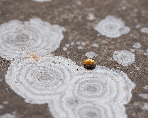 Ladybug, Enryakuji