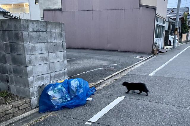 Today's Cat@2021−02−12