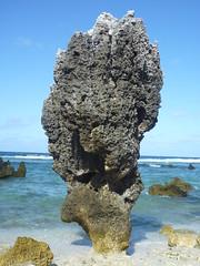 20110731_1559 Nauru ancient coral