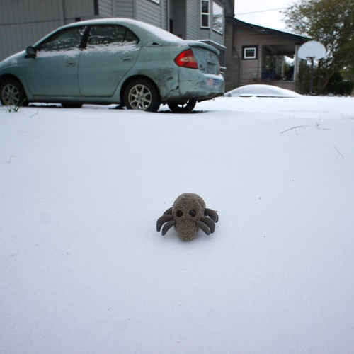 Snow Mite