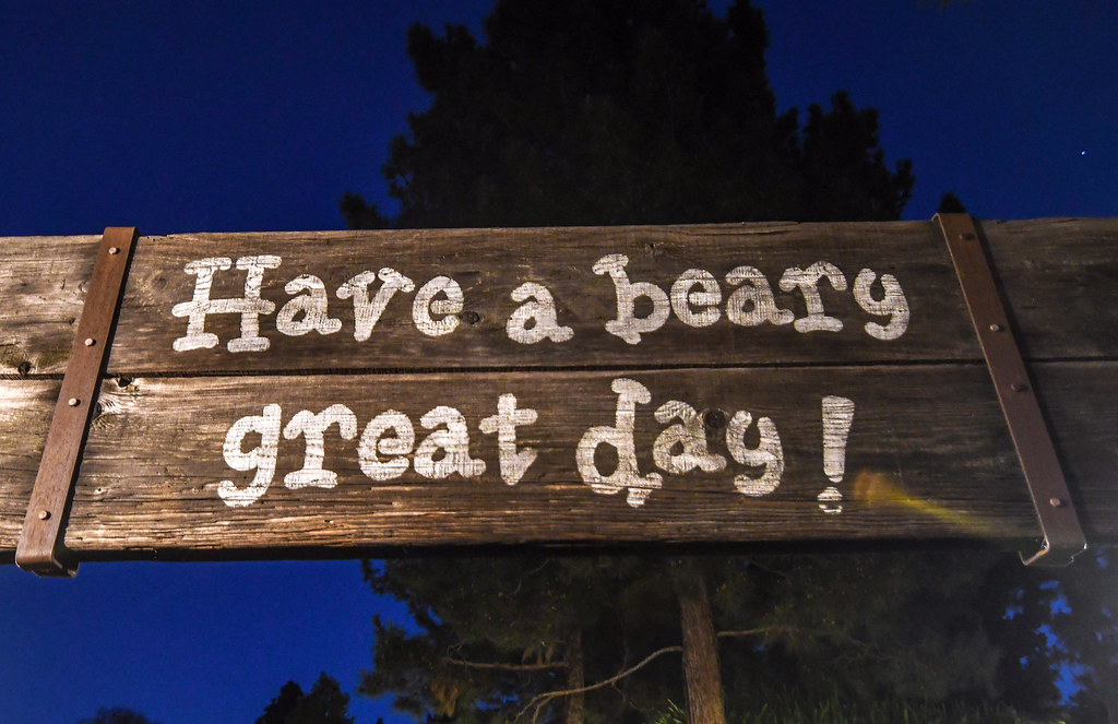 Beary Great Day DL