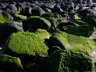 Seaweed rocks | by chadkoh