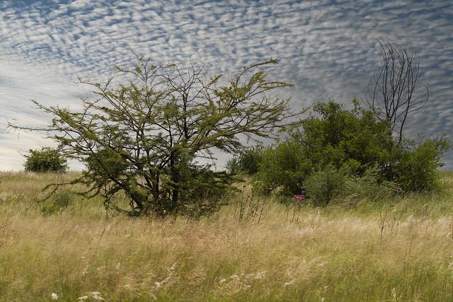 Reitvlei Nature Reserve