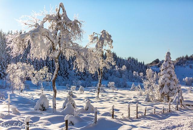 Winter Wonderland  ( In Explore )