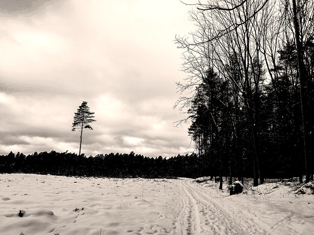 Winter loneliness...