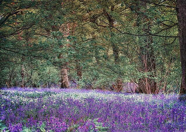 Woodland Carpet