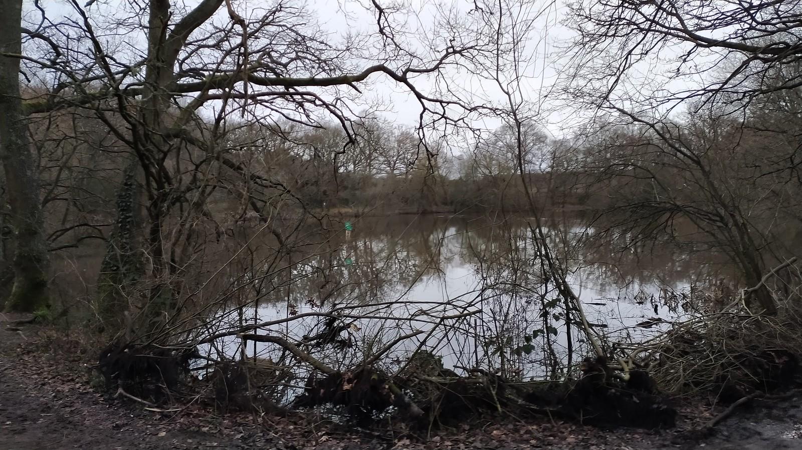 Epson Common Lake