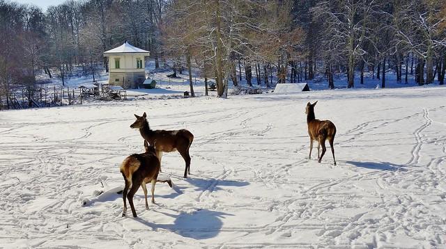 Germany, Winter im Rotwildgehege, serie , 60071/13394