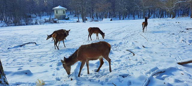Germany, Winter im Rotwildgehege, serie , 60066/13389