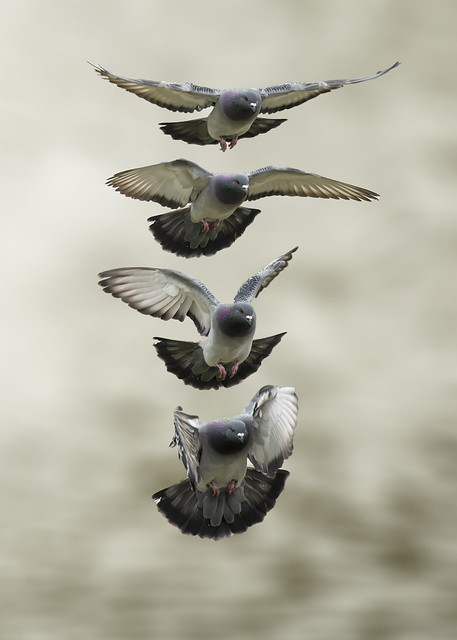 Dove Sequence
