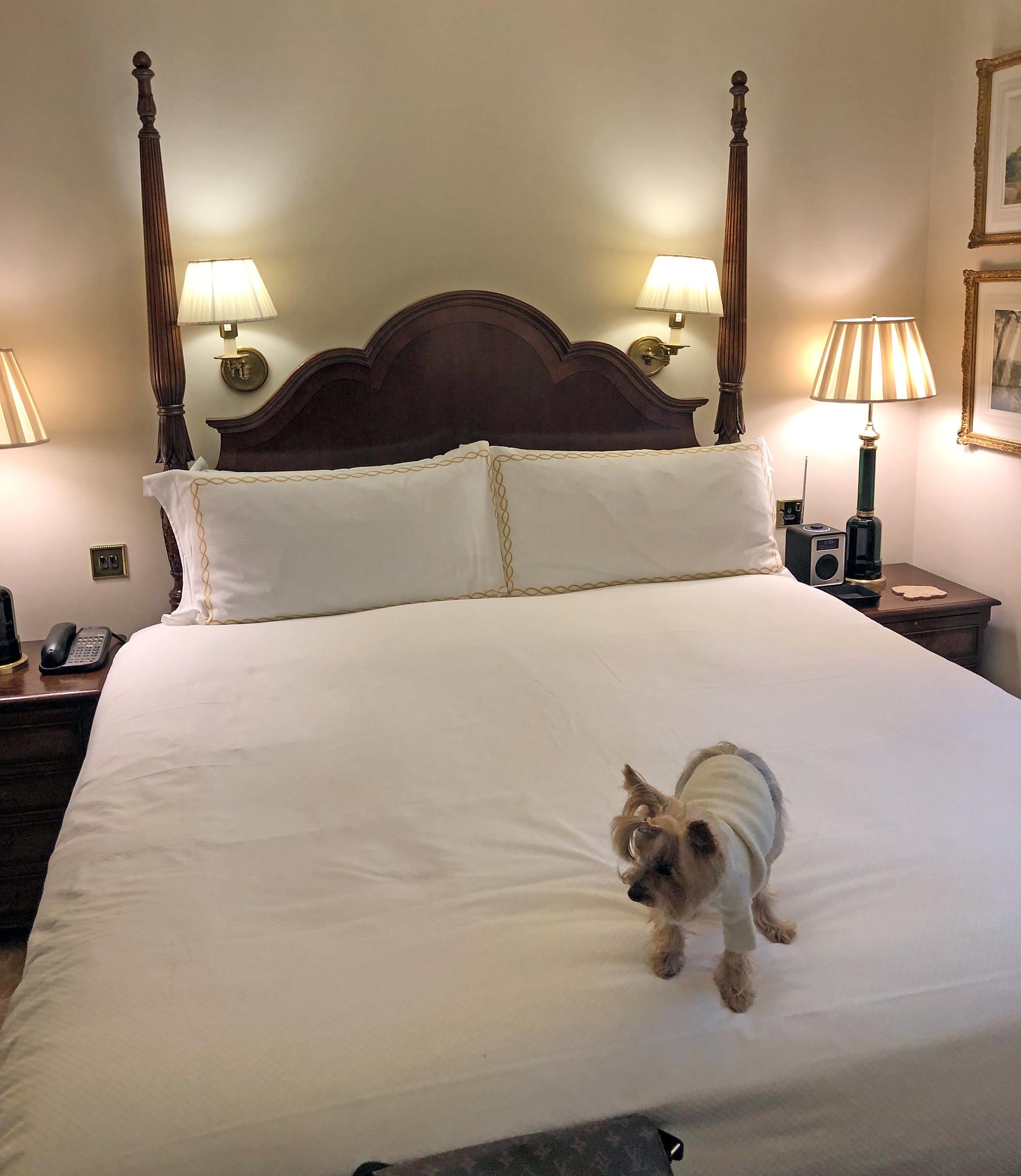 Hotel Savoy de Londres - The Savoy London - Thewotme hotel savoy de londres - 50940489991 9819bf5c29 k - El histórico Hotel Savoy de Londres