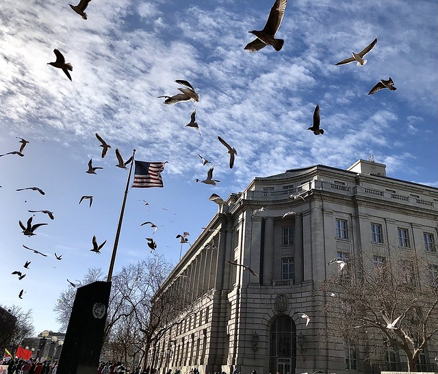 Birds in San Francisco Civic Center