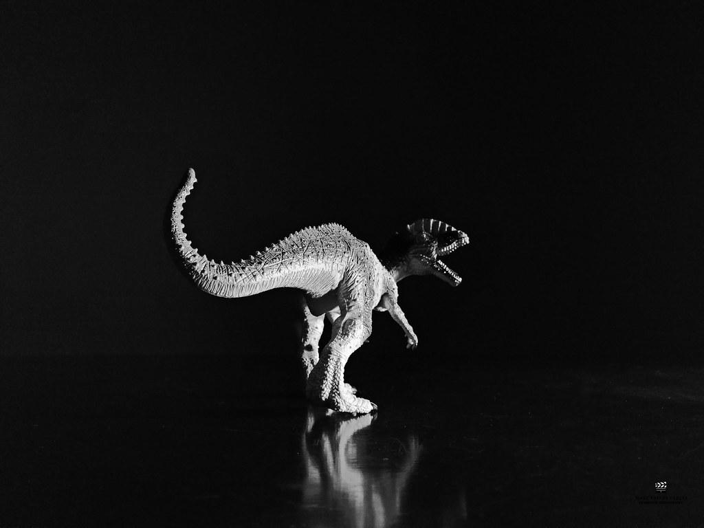 "Modelo: Dilophosaurus wetherilli  Fotografía by @jorgearandafilmmaker   (gr. ""lagarto de dos crestas de John Wetherill"") es la única especie conocida del género extinto Dilophosaurus de dinosaurio terópodo dilofosáurido que vivió a principios del periodo"
