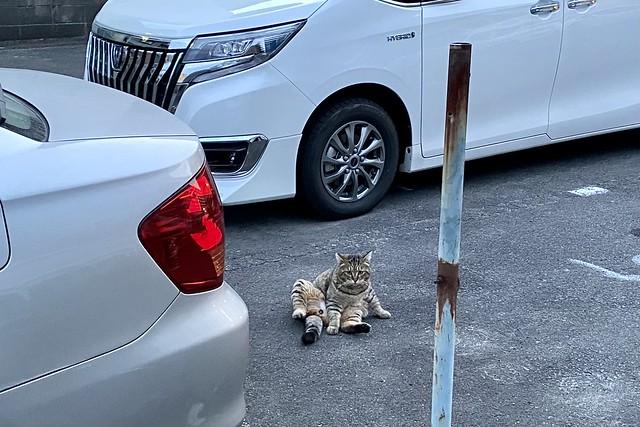 Today's Cat@2021−02−14
