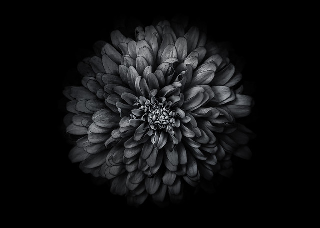 Backyard Flowers In Black And White 68