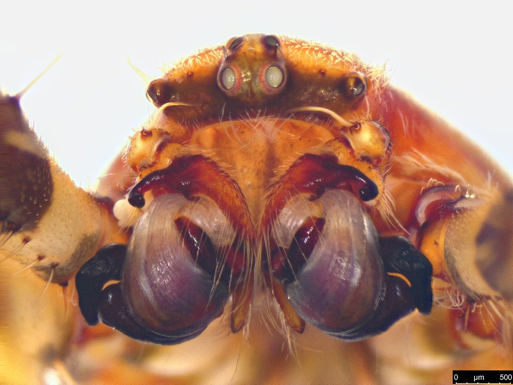 2f - Araneae sp.
