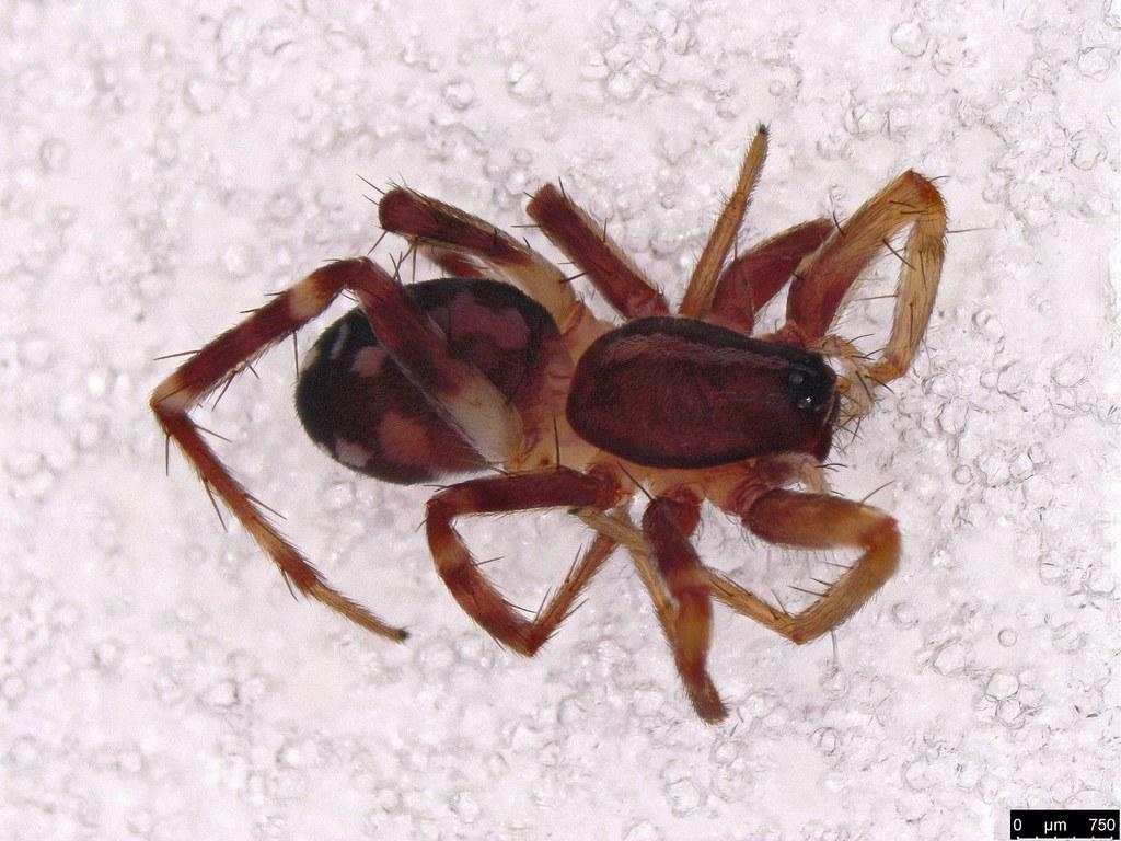 4 - Araneae sp.