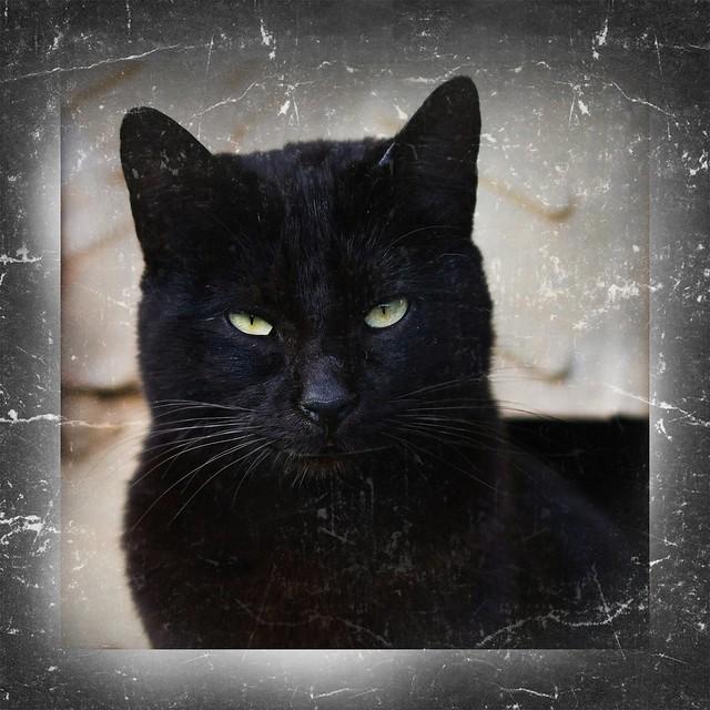 Una señal es la luz de reserva del coche, no un like de tu ex a una foto de tu gato. Féliz San Valentín.