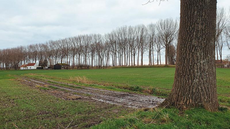 Krinkeldijk