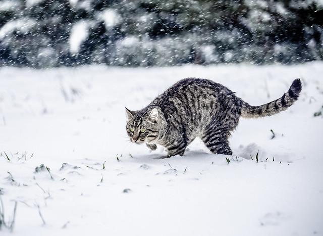 My cat in snow
