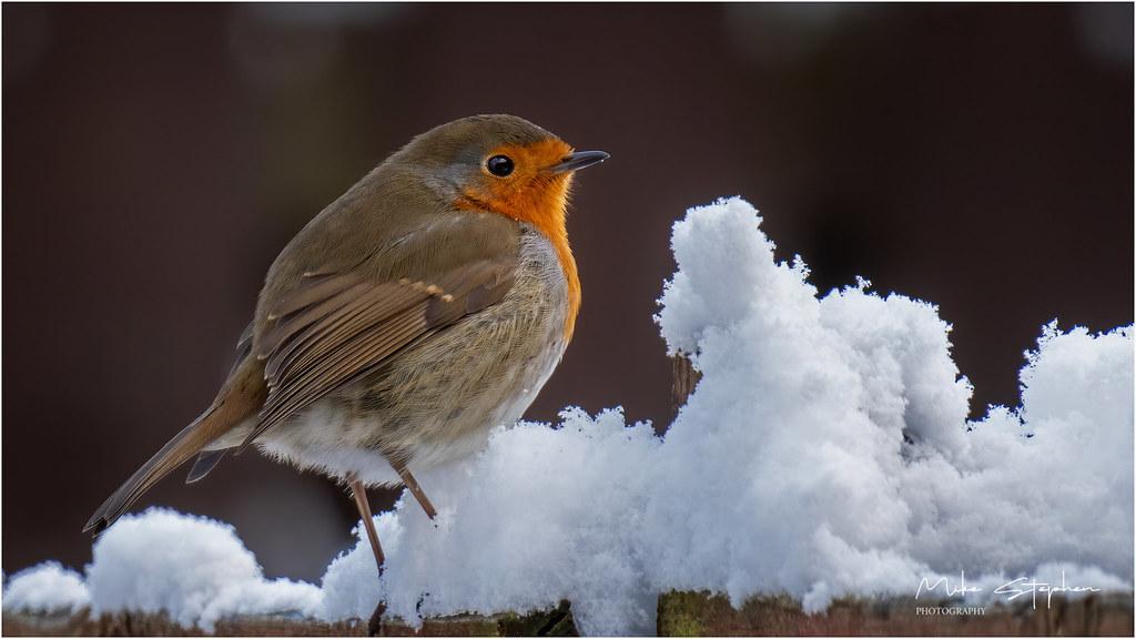 Robin & Snow