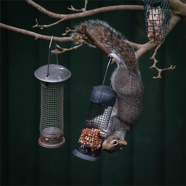 Squirrel 2. Balanced Diet