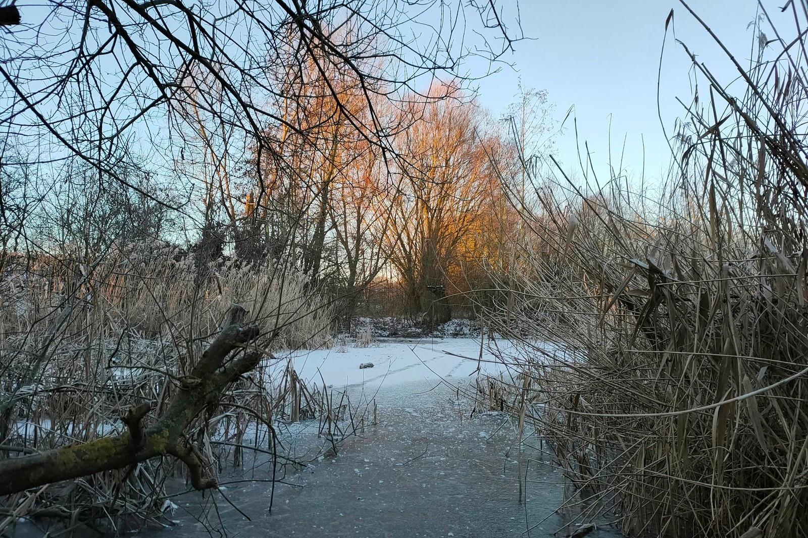 Biotop Rohrwiesen