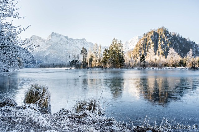 Winter am Almsee