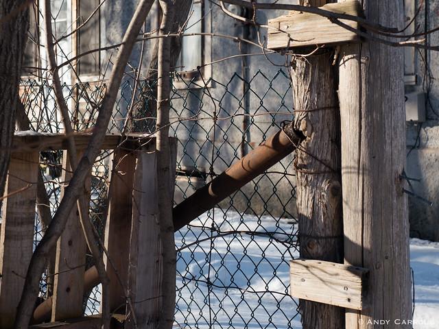 Fence, winter