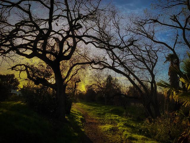 trees_0174g