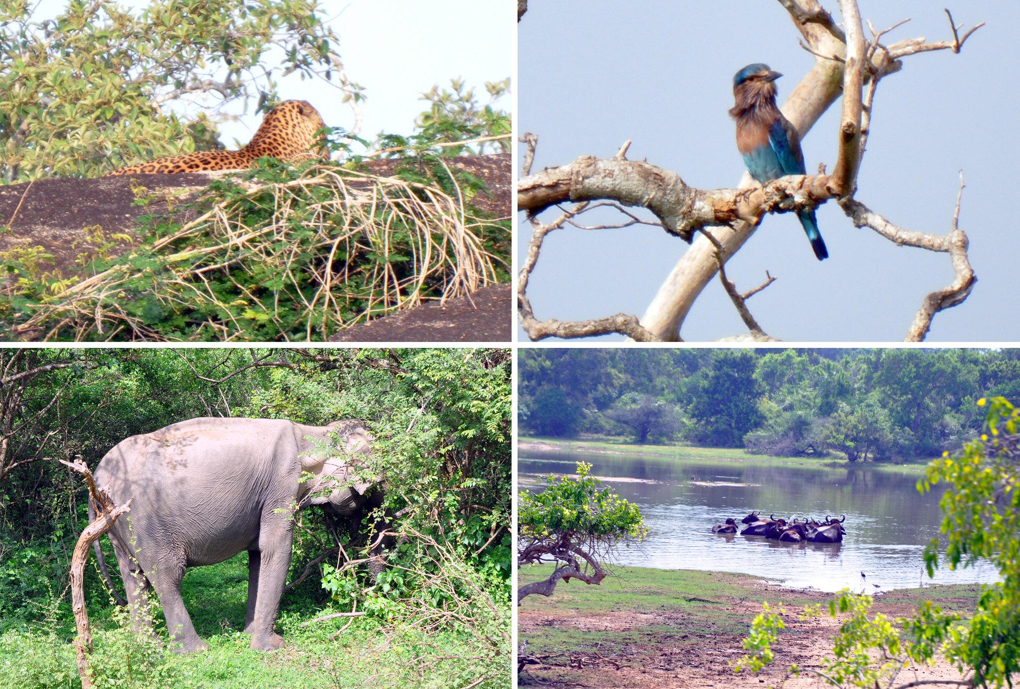 Hotel Chena Huts by Uga Escapes Yala Sri Lanka - Thewotme chena huts - 50943085813 508060cd1c k - Chena Huts by UGA Escapes, un pequeño paraíso en Yala