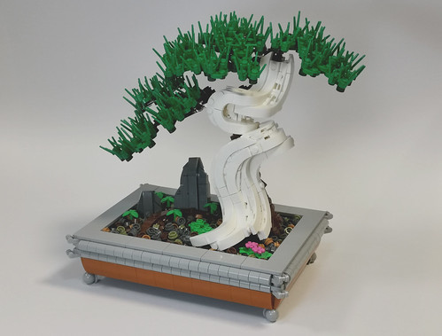 Deadwood Bonsai Tree