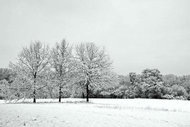White winter splendor IMG_7950